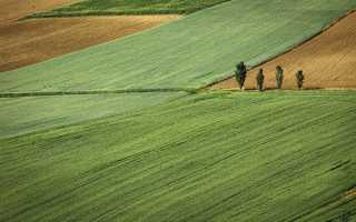 Особенности договора аренды земель сельхозназначения