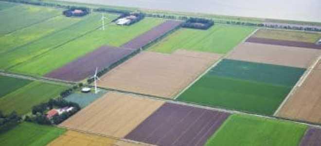 Приватизация земельного участка: основания, сроки, документы, цена и этапы процедуры